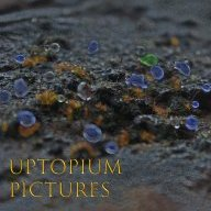 utopiumproductions